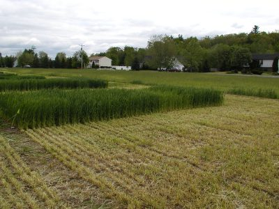 Agricultural research conducted by Advanced Ag Systems
